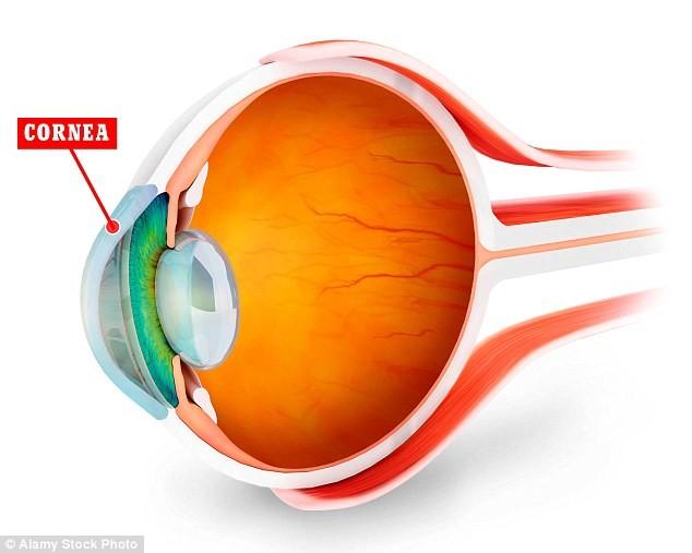 Diagram of an eye showing Cornea