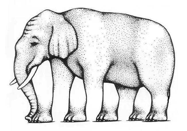 Literal optical illusion – Elephant legs