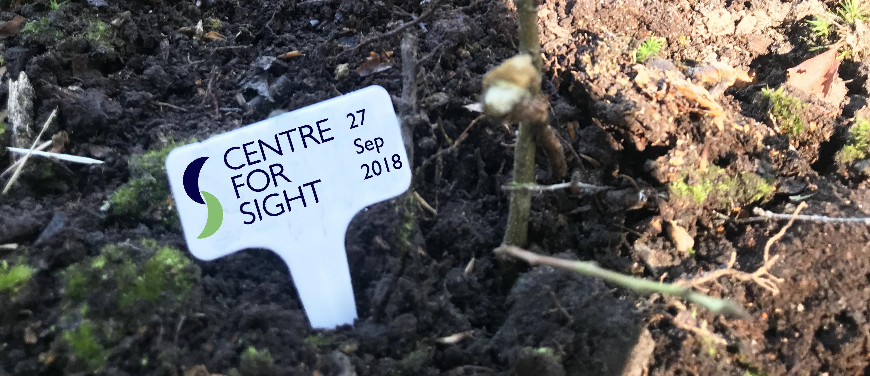 Centre for Sight oak tree plantation